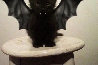 10+ костюмов для кошачьего Хэллоуина