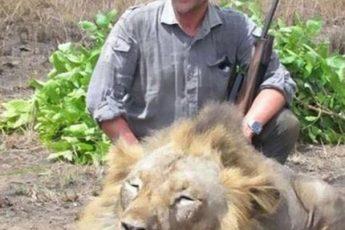 ветеринар возле убитого льва
