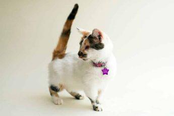 Забираю красоту слепых кошек