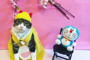 Кот в жёлтом