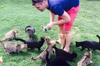 На Гаваях работает заказник для 500 кошек