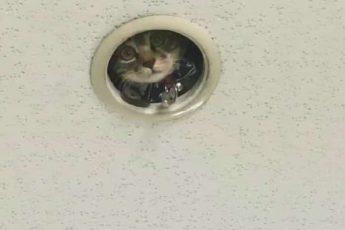 кот смотрит из дырки в потолке