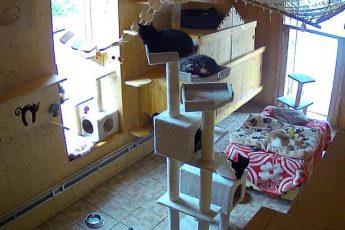 коты в приюте