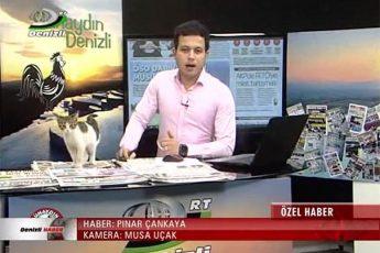 кот прервал трансляцию