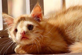 уродливый котик