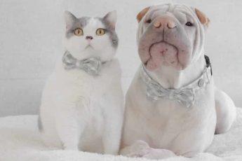 Собака и кот в бабочках