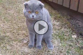 Кот ругается