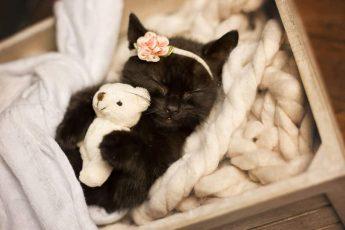 Кошка спит с игрушкой