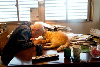 Кот и дедушка Джиджи - любовь