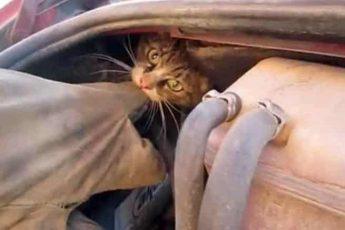 Кусачий кот под капотом
