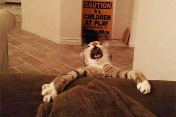 Нет, хозяин, не забирай диван!