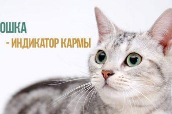 Кошка и карма