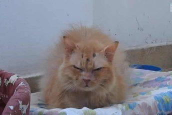 Кошка возненавидела людей