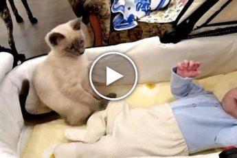 Кошка няня