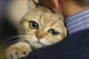 Кошки спасатели