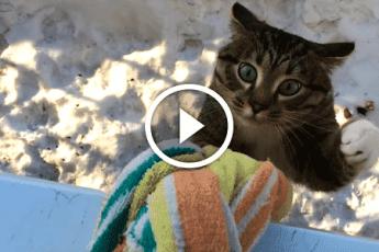 Кот идет домой