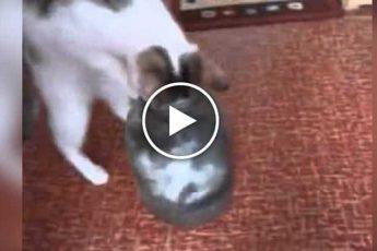 Котёнок в банке