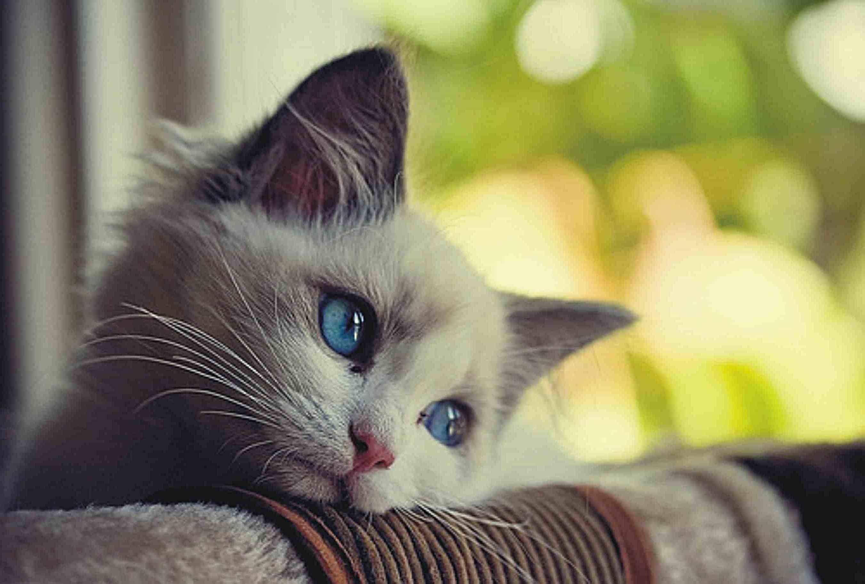 Почему кошка грызт провода как отучитьот вредной привычки
