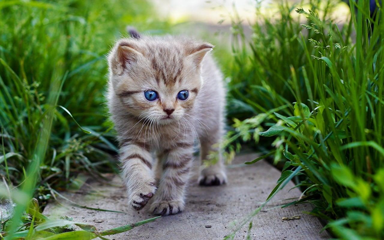 Как пристроить котят в хорошие руки