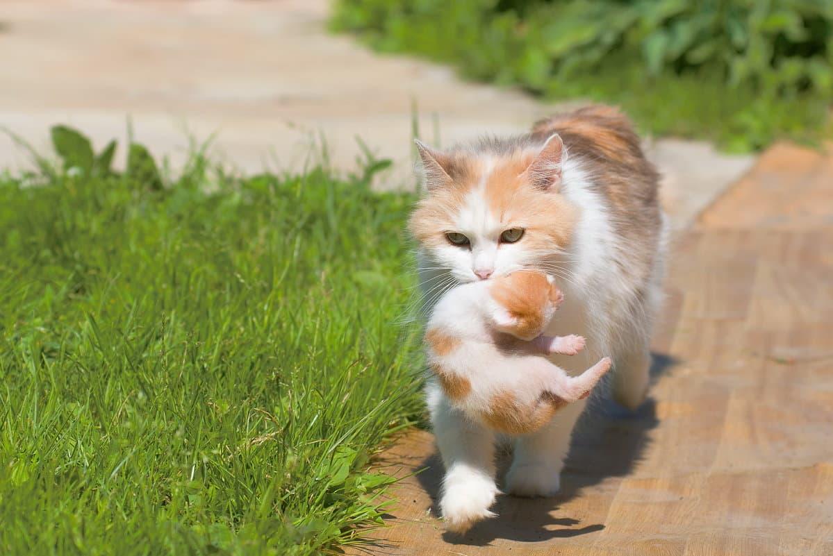 Одичавшая кошка догадалась прийти к людям, когда её котятам понадобилась помощь