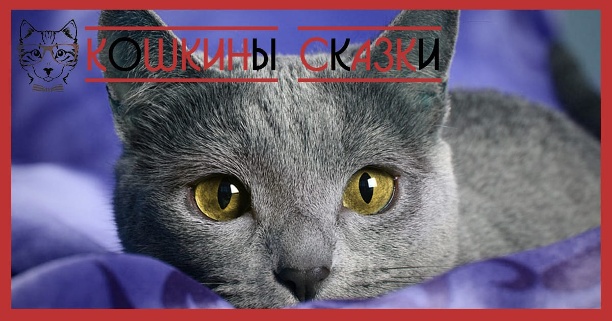 russian blue cat personality