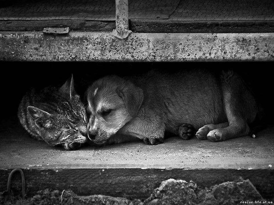 Животные не бросают людей картинка