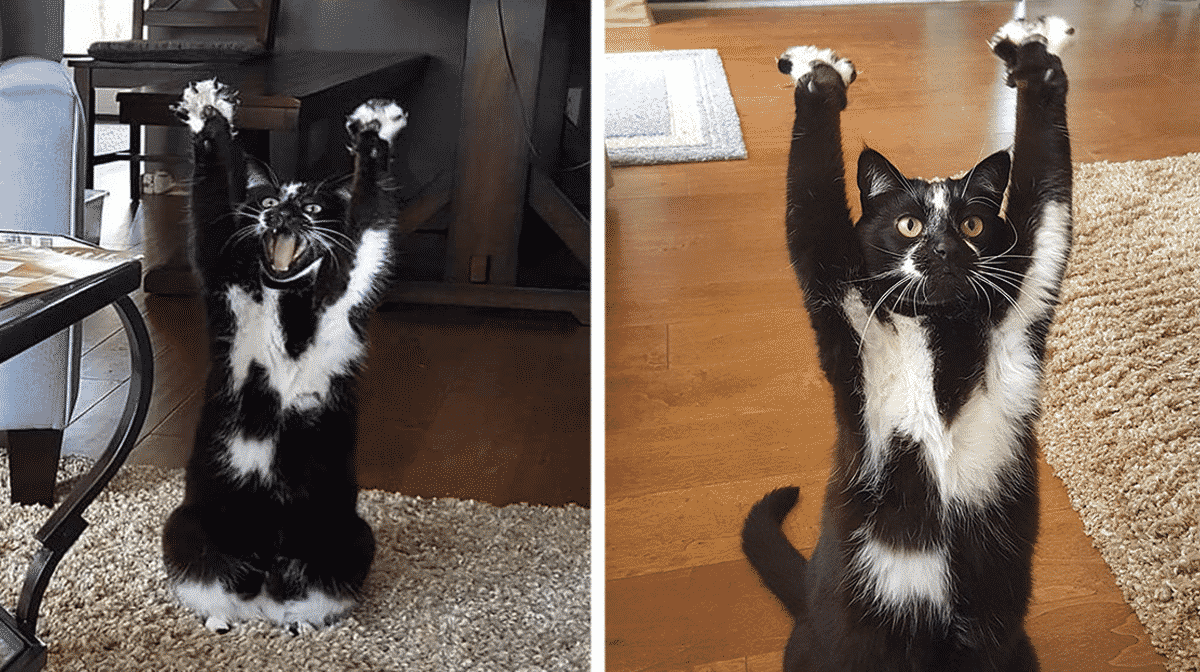 this cat keeps putting its paws in the air and nobody - 1200×630
