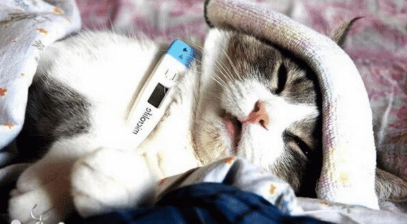 Может ли кошка заразиться от человека гриппом